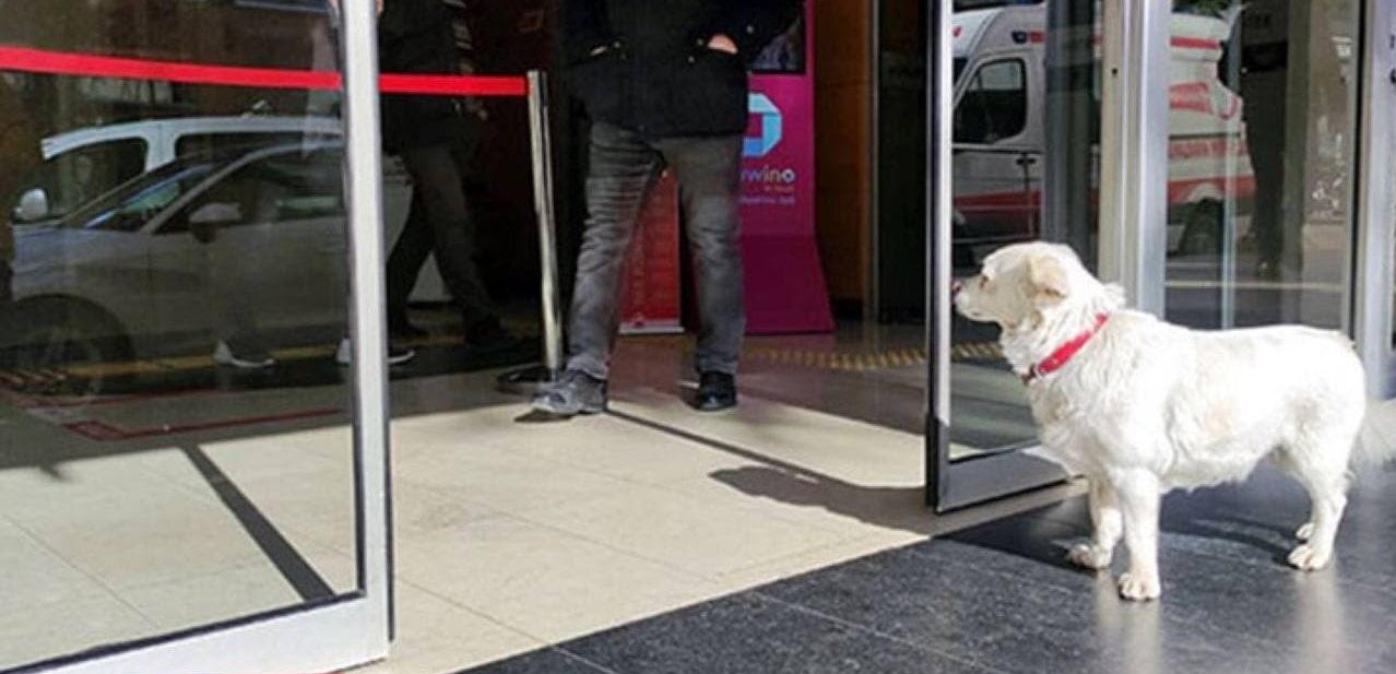 سگ وفادار در کنار درب بیمارستان ترابزون